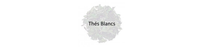 Organic White Tea Wholesale - Organic White Tea Supplier - Obvious Tea